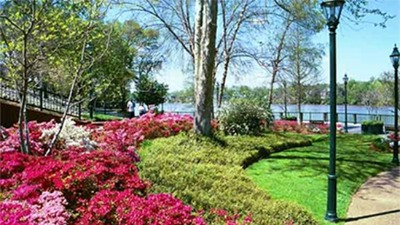 Photo of the Riverwalk in Augusat Georgia showing trees and flowers