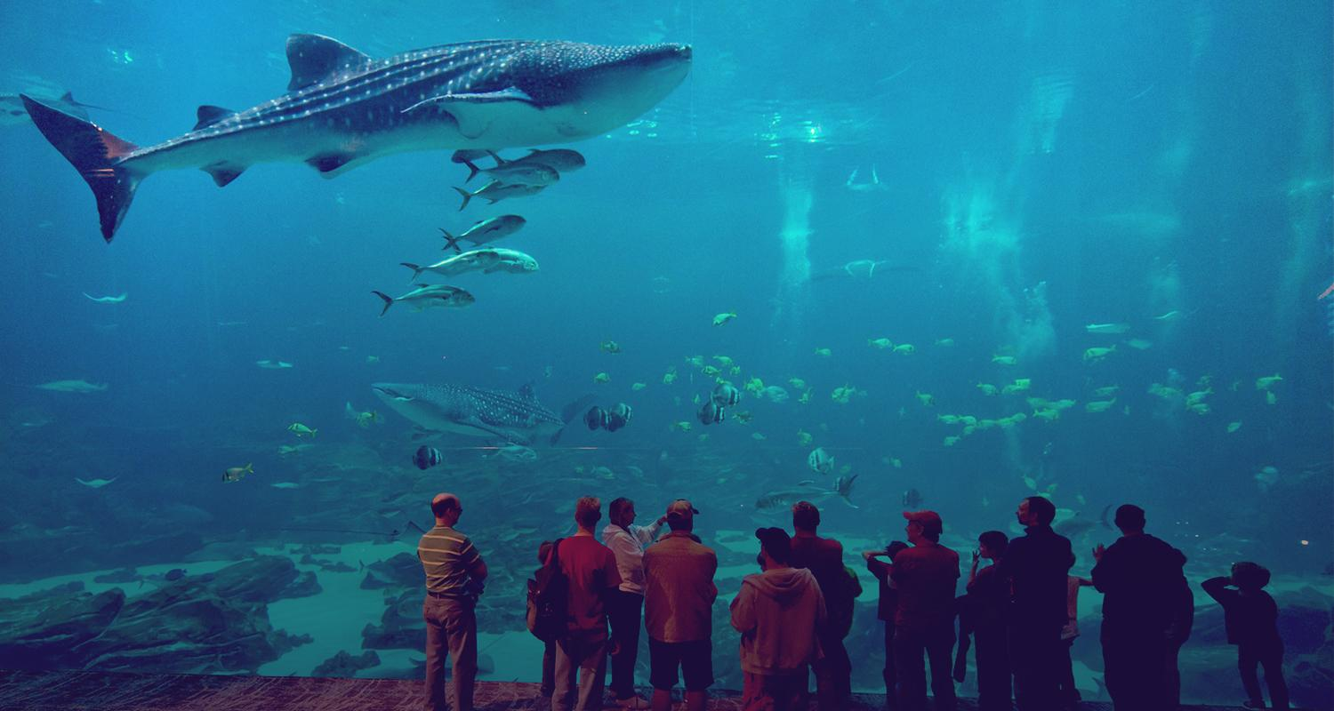 Visit the Georgia Aquarium in the state's capital. The Georgia Aquarium is one the largest aquariums in the world.