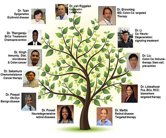 bmb faculty tree