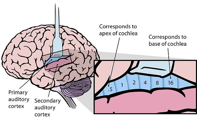 Grades 6 12 map of the brain ccuart