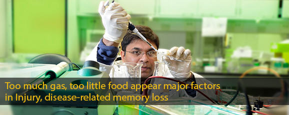 Too much gas, too little food appear major factors in Injury, disease-related memory loss
