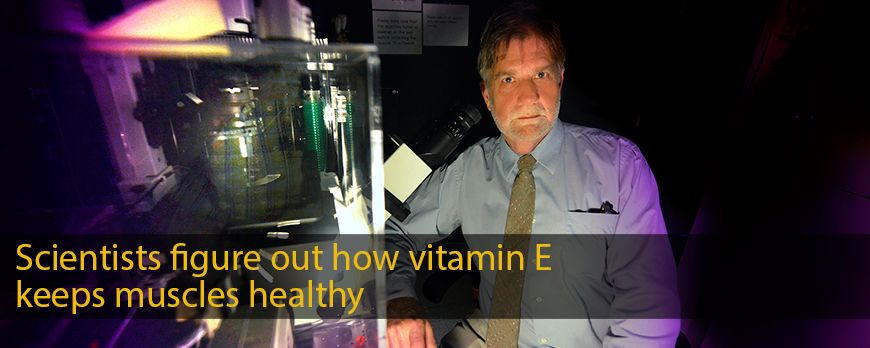 Scientists figure out how vitamin E keeps muscles healthy