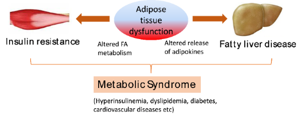 Technical Illustration of Metabolic Syndrome
